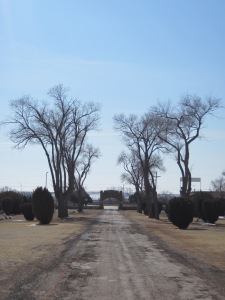 Trees living the cemetery road